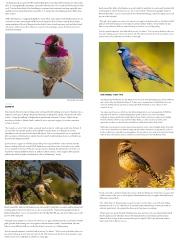 BirdingIconic3